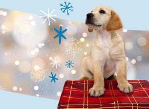Guide Dogs Christmas